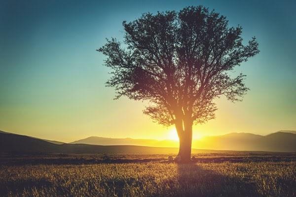 La providencia de la naturaleza y la obediencia